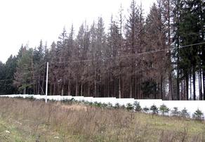 В Калужской области короедом заражены около 5 тысяч гектаров леса