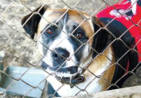 Собаки Нового ковчега живут только на пожертвования
